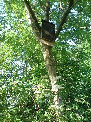 Der Fledermauskasten ist am Baum festgemacht und warter auf Gäste