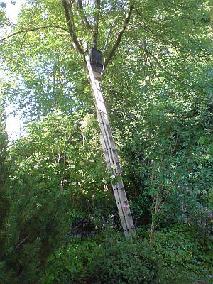 Der Fledermauskasten wird am Baum aufgehängt.