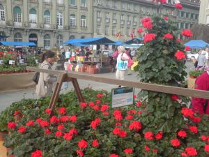 Graniummärit Bern 2014