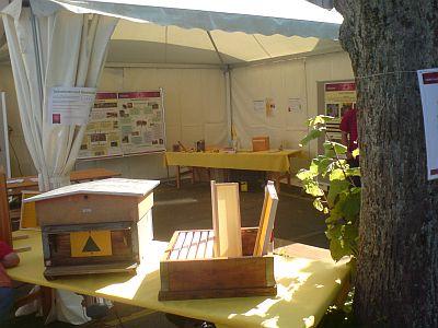 Nacht der Forschung: Bestäubung in Gefahr - Forchung zur Bienengesundheit