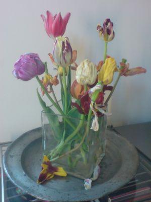 Nature morte mit Tulpen