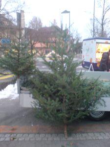 Weihnachtsbaum kaufen Bern