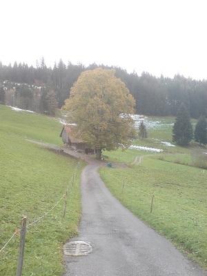 auf dem Wanderweg oberhalb von Ringoldswil