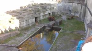 Bär Fink im Bäregraben Bern